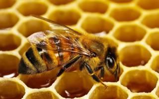 Пчелиная перга при простатите