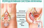 Рекомендуемые препараты при хроническом простатите